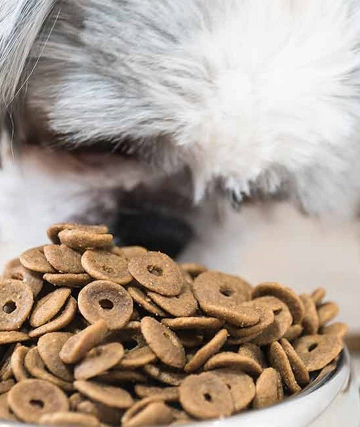 Do you have a puppy? Tips for choosing the best puppy food